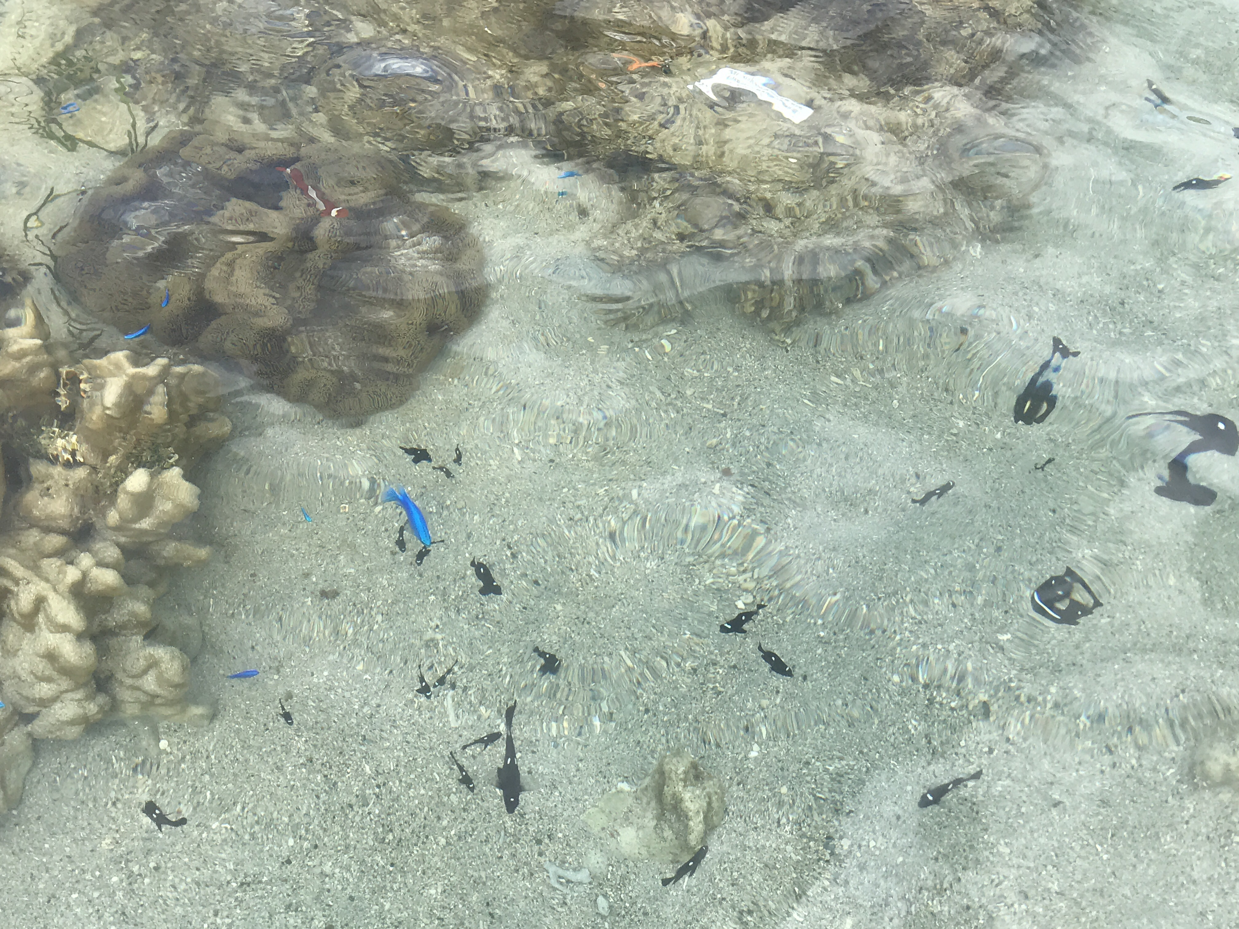 石垣島のビーチ 3